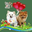 Pomeranian lover