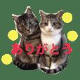 挨拶する仲良し猫 あんちゃん&ひなちゃん
