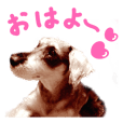 Schnauzer`s sticker for cute girls.