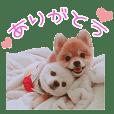 ポメDAYS★BOSS★
