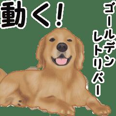 Move! sticker of Golden Retriever