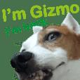 Gizmo the Ugly Jack set 2