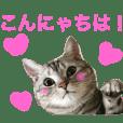 アメショのアラン 猫スタンプ