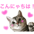Alain cat