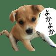 鹿児島弁の犬