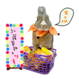bingo rabbit