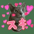 レオン☆シェリア 猫写真スタンプ