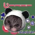 猫にゃ・にゃ・にゃ!part6