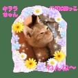 幸せになった保護猫3