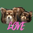 LOVE & ICHIGO