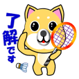 A shiba inu which plays badminton