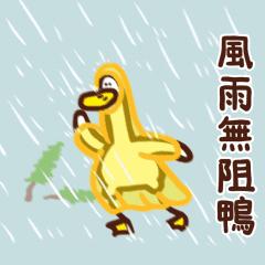 風雨無阻鴨!