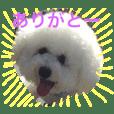 犬のひとことスタンプ part1