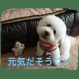 ひとことメッセージ 犬バージョン part1