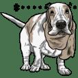 Basset hound 14(dog)