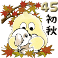 【Big】シーズー犬 45『初秋』