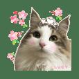 可愛いルーシー姫*②