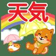 柴犬「ムサシ」30 天気