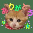 子猫のちゃちゃお