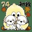 シーズー犬 74『初秋』