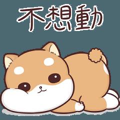 柴犬皮皮 - 懶癌末期