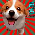 柯基犬麻吉-愛