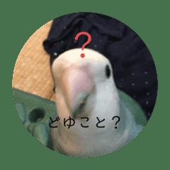 愛鳥ぴーすけ!!!②