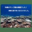 沖縄の海風景絵葉書と海中生物の日常会話3