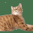 Cat Mugi