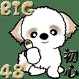 【Big】シーズー48『初心に戻って』
