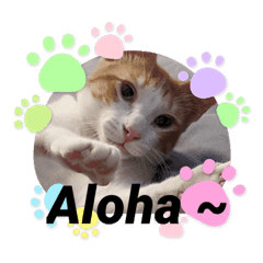 子猫スタンプ(英語でお返事)