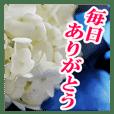 花のある記念日3