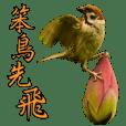 Bird language part 2