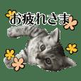 たむちゃんスタンプ 子猫編