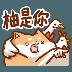 棉花糖柴柴 - 崩壞狗狗篇!