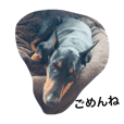 Doberman pictures with Japanese phrases