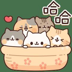 滿滿都是貓 3