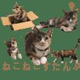 猫ねこネコ写真すたんぷ