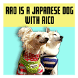 Rao is a Japanese dog with Rico.