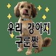 ポメプー くるんちゃんの百面相~韓国語~