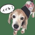 福島アダプトネットワーク看板犬ちくわ