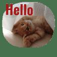 動物写真★猫多め**