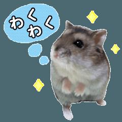 ジャンガリアンハムスターのちびちゃん2 - LINE スタンプ   LINE STORE