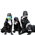four labrador letriever Sticker