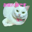アメショのみるく 5 (敬語)