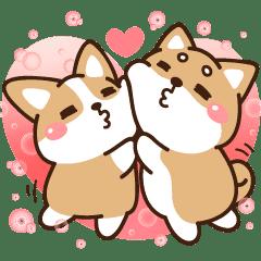 柴語錄 - 愛你唷~寶貝