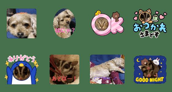 「動物…動物」のLINEスタンプ一覧