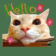 Yogi-chan 3