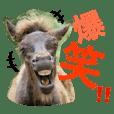 Wildhorses4