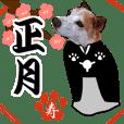New Year holidays dog